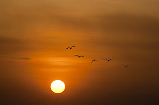 https://pixabay.com/pt/p%C3%B4r-do-sol-mar-sol-aves-crep%C3%BAsculo-600095/