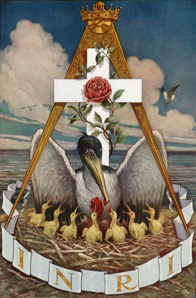 Traveling Templar: The Pelican