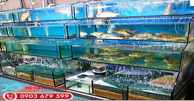 Cần tìm dịch vụ xây lắp hồ hải sản chuyên nghiệp ở TP HCM