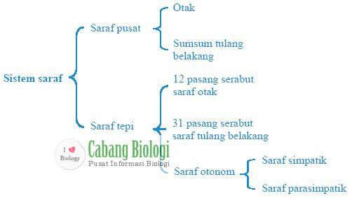 Bagan sistem saraf manusia