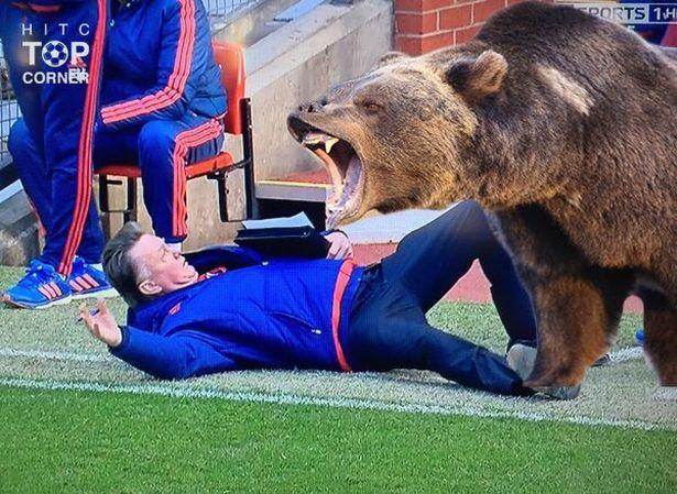 Vangaal Bear