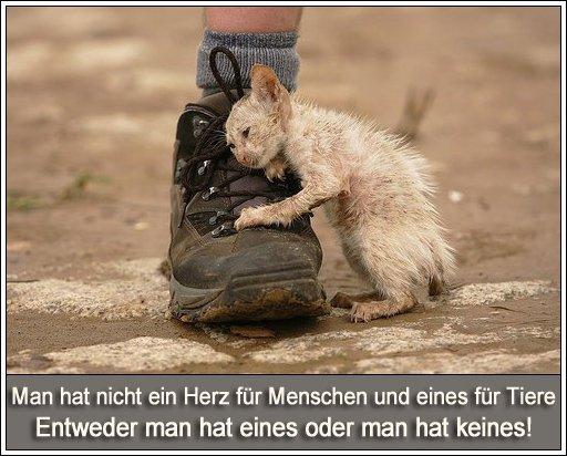 Schön Die lästige Nachbarin: Tierschutz - Entweder man hat ein Herz für  JC97