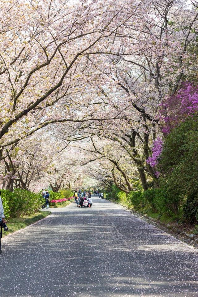 Flower Park Share Experience Tour to Japan