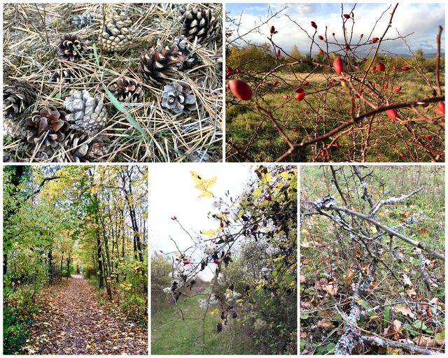 Darf man im Wald Zapfen Flechten Zweige Hagebutten Clematis sammeln