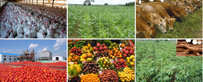 5 Most Profitable Agricultural Business Ideas You Can ...