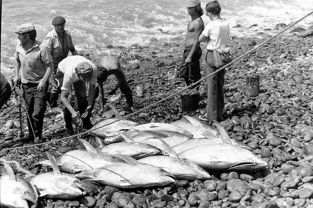 pesca del atun
