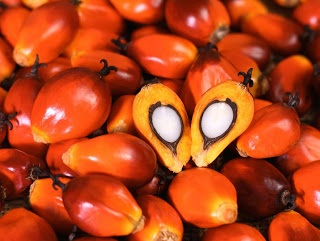 Naira/dollar crisis a blessing for top palm-oil producers