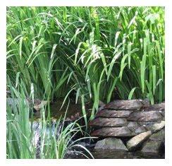 Veggie Filter, Bog Pond Filters