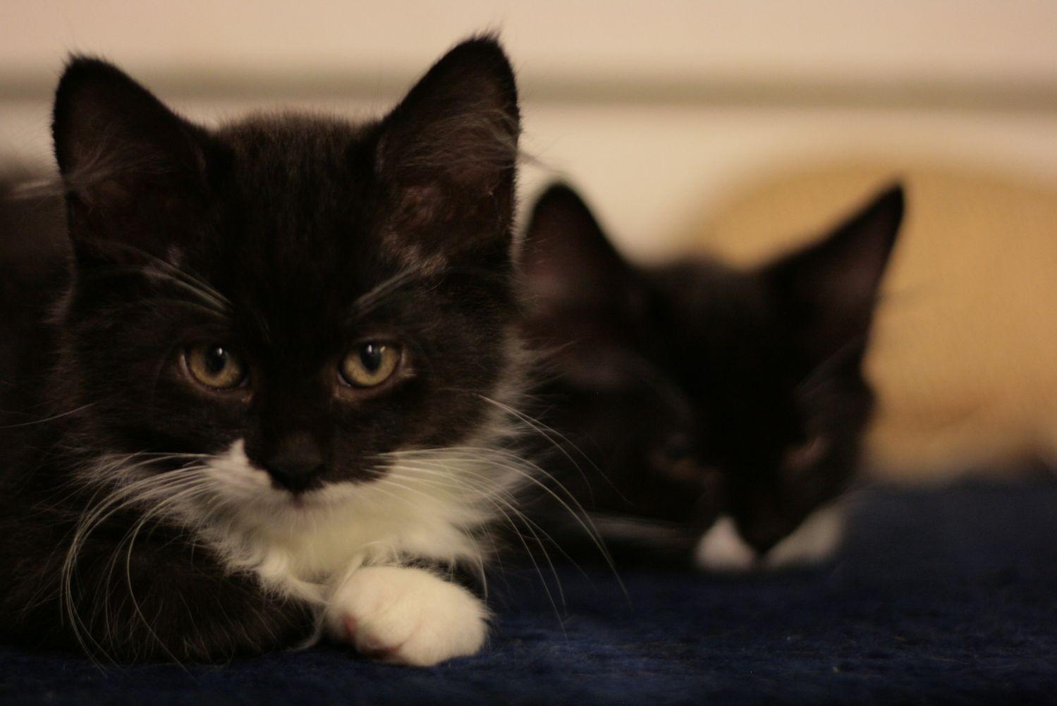 Kissakoti