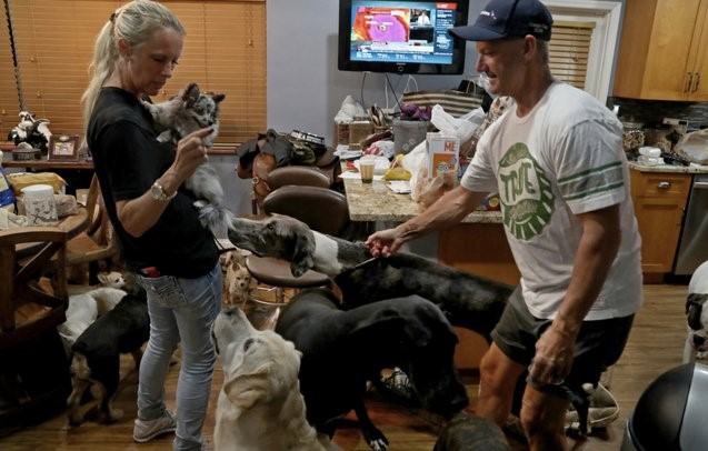 Through The Hurricane A Couple Got Care Of 46 Pets