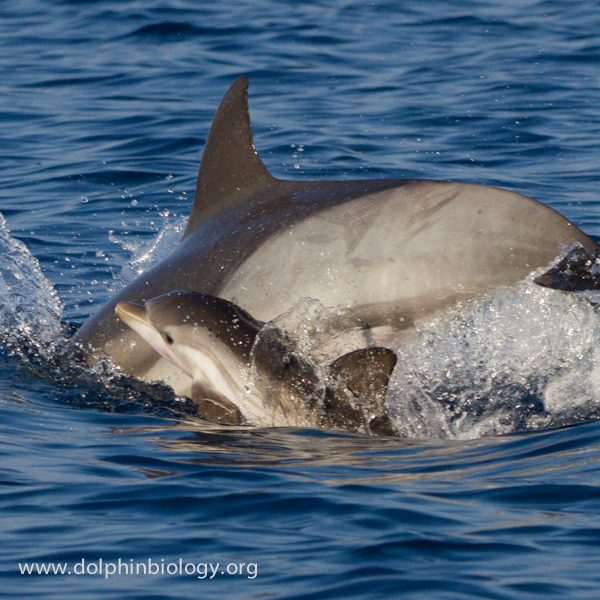 Dolphin Biology and Conservation: September 2014