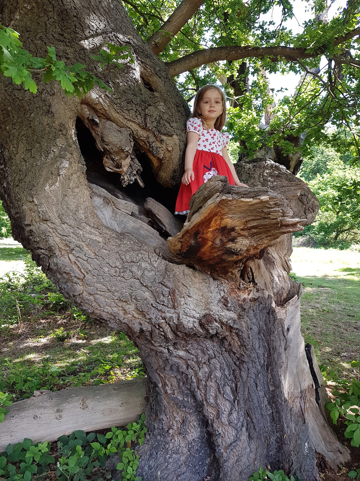 girl in a tree at epping forest