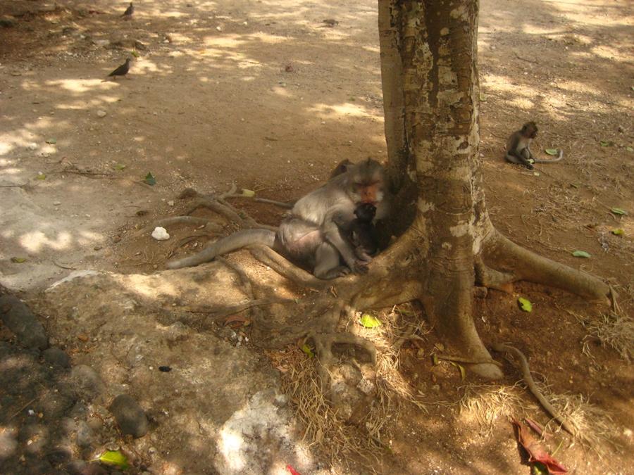 원숭이 가족
