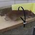 Jebakan Tikus Sederhana Terbukti Ampuh