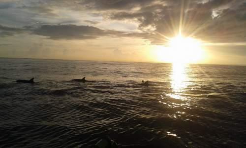Melihat Lumba-lumba di Pantai Lovina