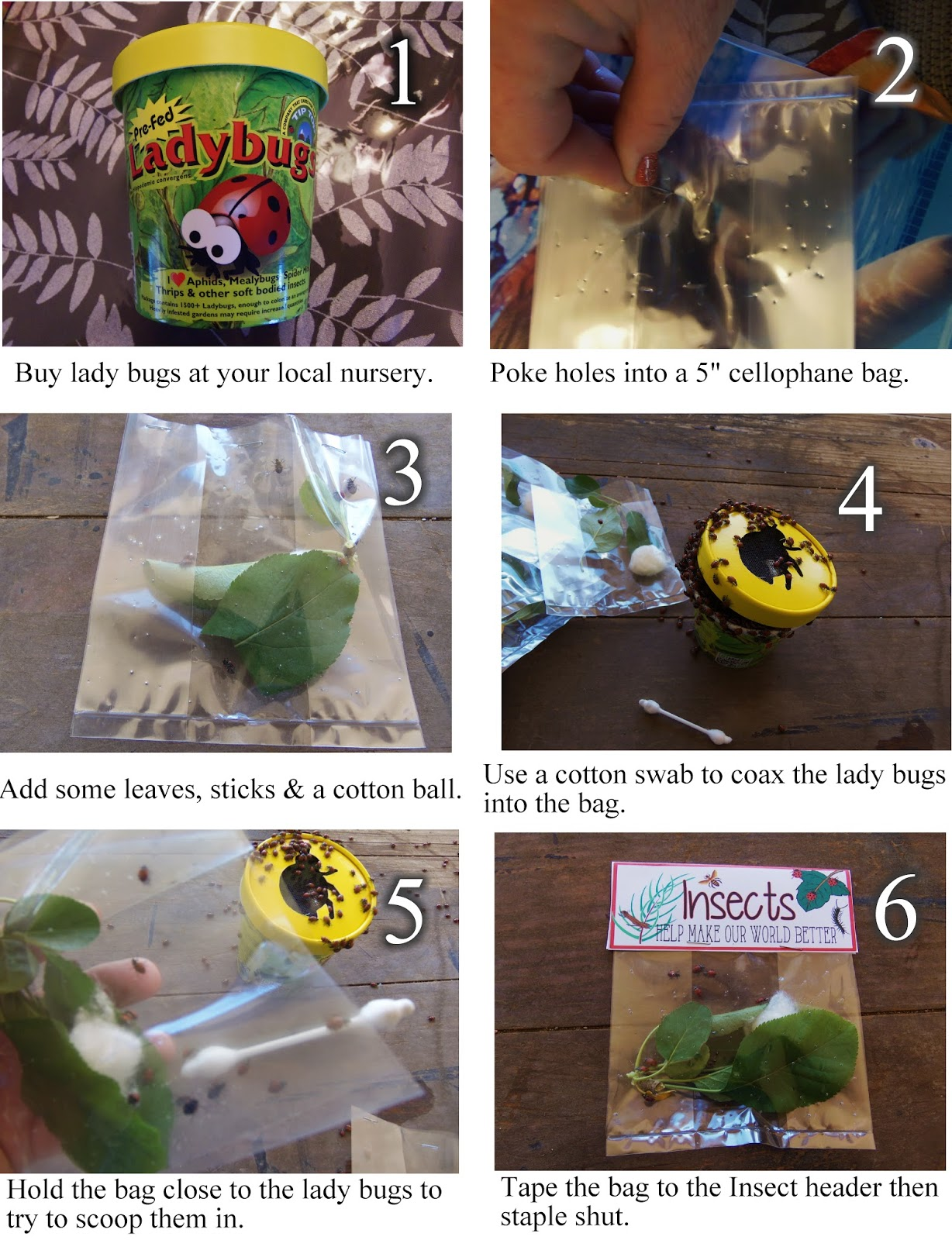 Bug Life Printout Pictures 16