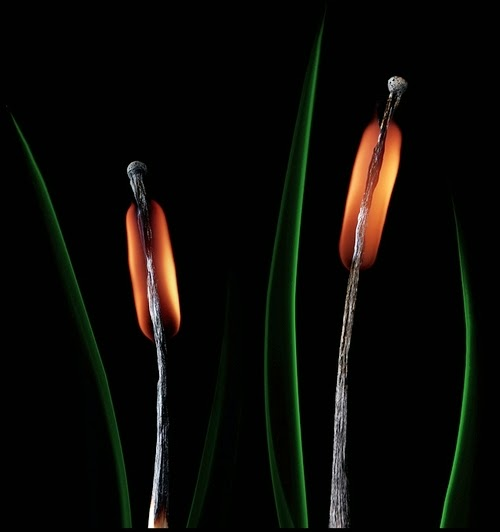 22-Match-Plants-Flame-Russian-Photographer-Illustrator-Stanislav-Aristov-PolTergejst-www-designstack-co