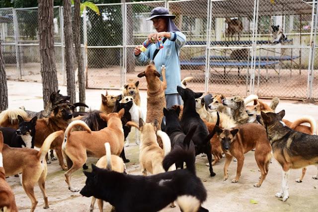 Sau 14 năm hoạt động, Soi Dog Foundation đã phối hợp với các cơ quan chính phủ xóa bỏ tình trạng buôn bán giết mổ chó ở Thái Lan với quy mô lên tới hơn 500.000 con một năm; loại bỏ hoàn toàn bệnh dại tại Phuket và nhân rộng mô hình đội tiêm phòng lưu động tại các tỉnh của Thái Lan.