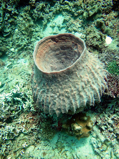 Hard coral that shows sings of dying
