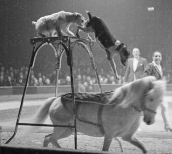 Wordmall: Dog & Pony Show