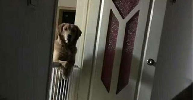 PELIK. Anjing Ini Tiap² Malam Tenung Pemiliknya Sehingga Lelaki Itu Tidur, Selepas Disiasat Rupa²nya...