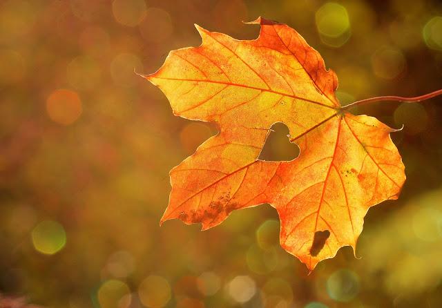 10 coisas para fazer no Outono