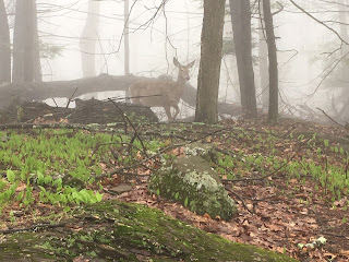Sights on my trail run.