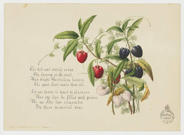 Christmas Card design depicting varieties of Tasmanian Arictotelia Peduncularis.