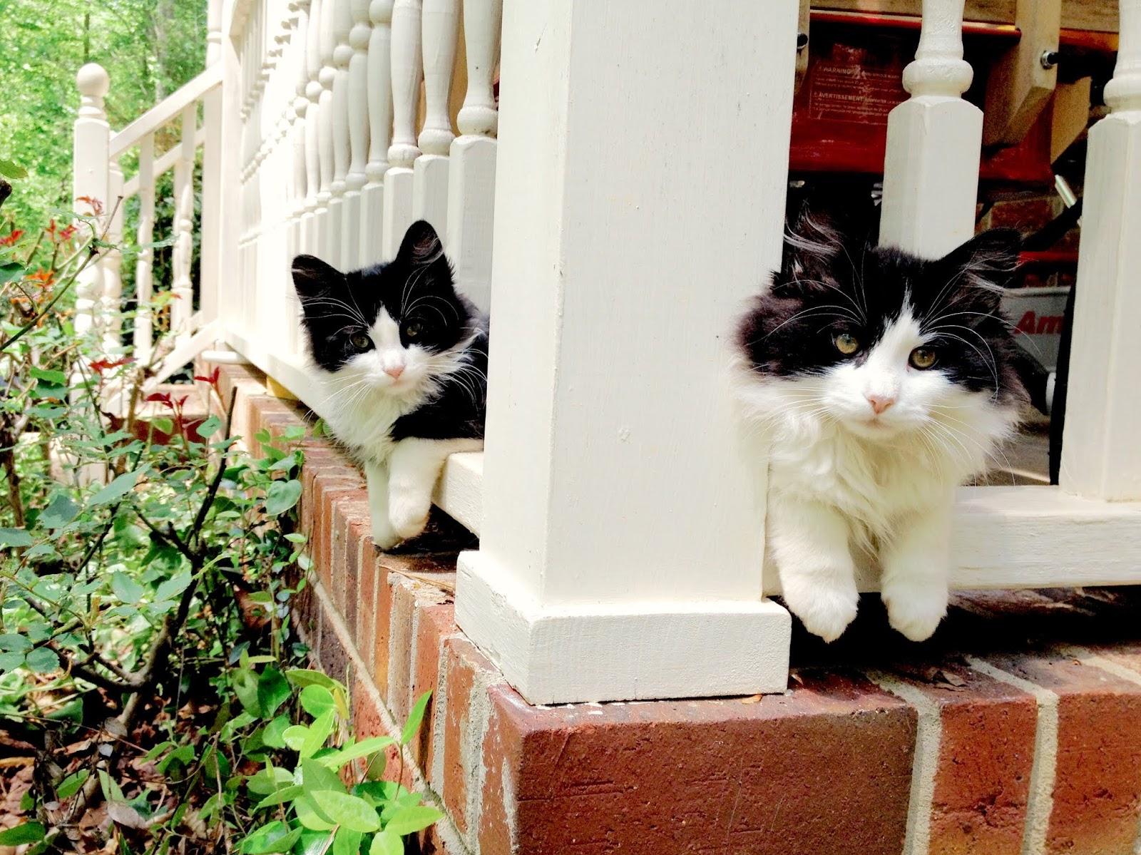 Get Catster in Your Inbox!