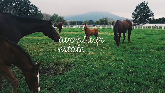 avontuur estate horses and foals