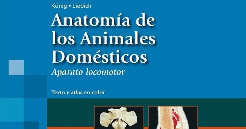Anatomia De Los Animales Domesticos Sisson Epub