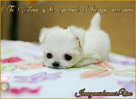 Frases de te esperare, perrito blanco