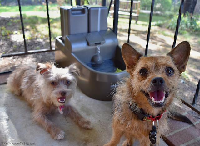 Bailey and Jada with their PetSafe Drinkwell Water Fountains for Dogs and Cats