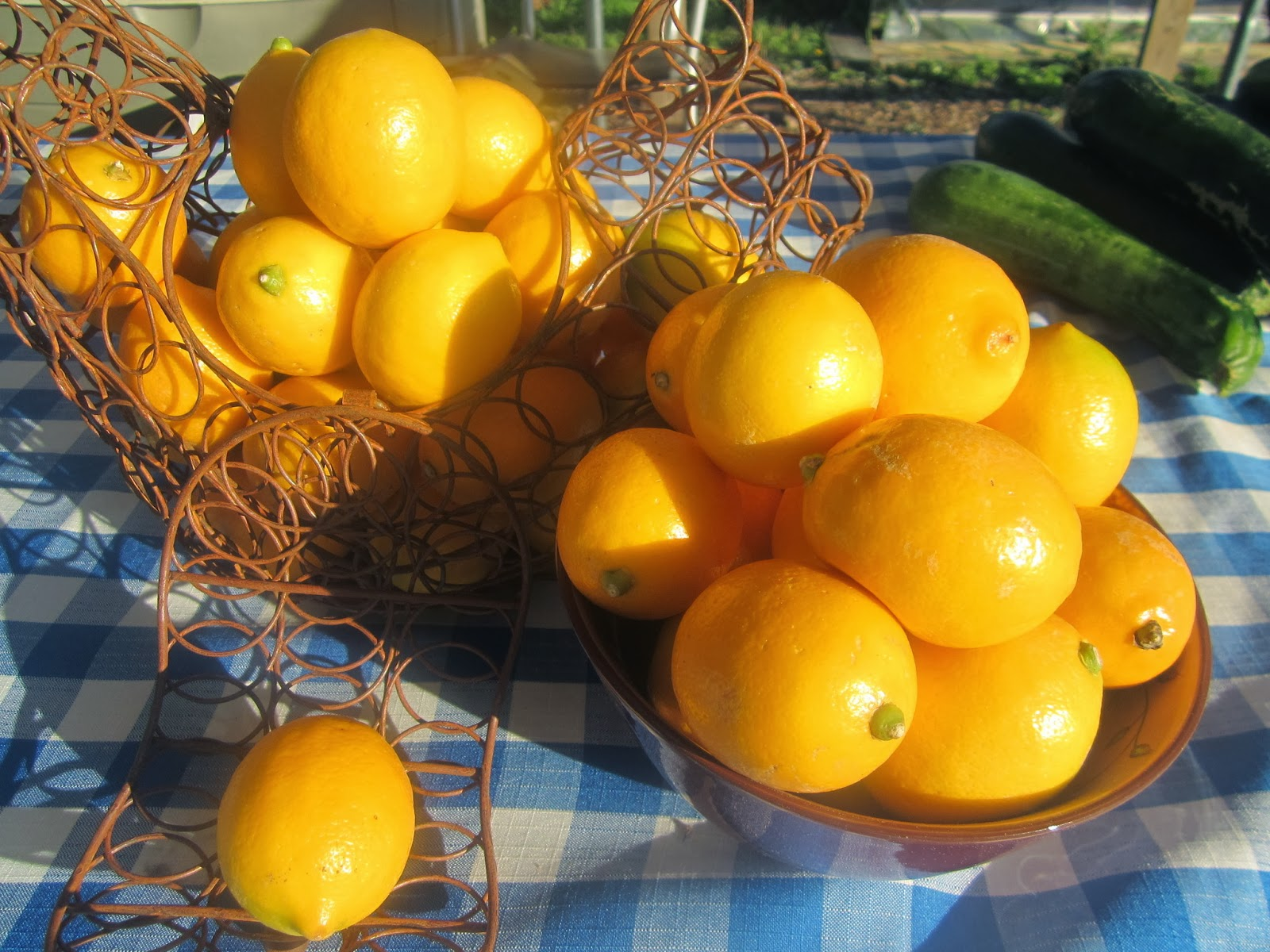 A table with a display of freshly harvested citrus fruits