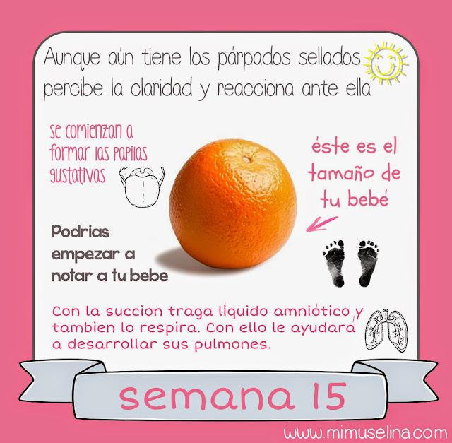 semana 15 embarazo, embarazada tamaño bebe semana15