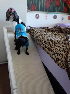 rampas para cães com guard rail