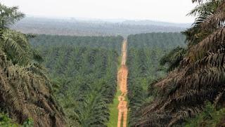 Actualité juridique : Loi relative au domaine foncier rurale en Côte d'Ivoire