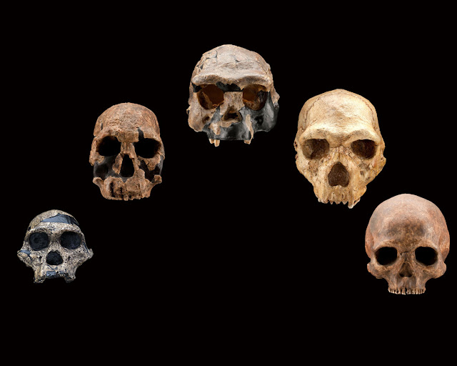 Origin of human genus not in response to climate change claims new study