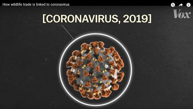 Image by Vox. The Coronavirus.