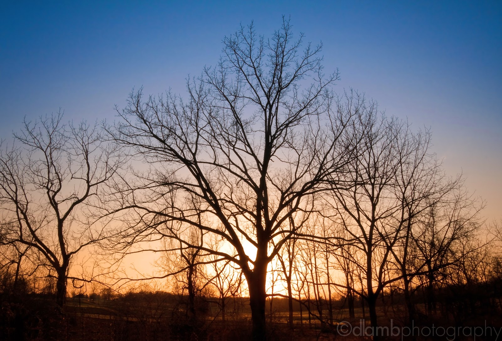 http://www.redbubble.com/people/dlamb/works/8609859-winter-trees-at-dusk