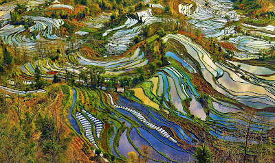 Honghe Hani Rice Terraces