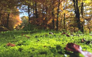 秋の森の風景
