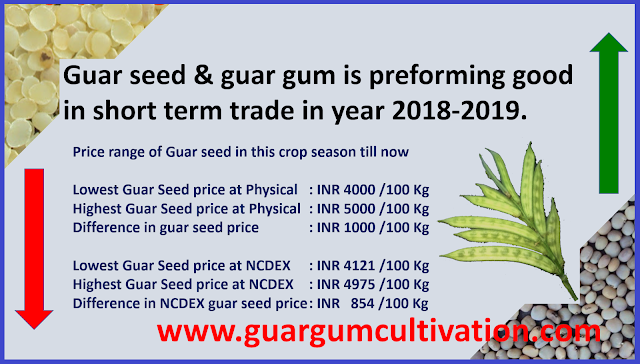 Guar seed and guar gum is giving return in short term trade. , Guar, guar gum, guar price, guar gum price, guar demand, guar gum demand, guar seed production, guar seed stock, guar seed consumption, guar gum cultivation, guar gum cultivation in india, Guar gum farming, guar gum export from india , guar seed export, guar gum export, guar gum farming, guar gum cultivation consultancy, today guar price, today guar gum price, ग्वार, ग्वार गम, ग्वार मांग, ग्वार गम निर्यात 2018-2019, ग्वार गम निर्यात -2019, ग्वार उत्पादन, ग्वार कीमत, ग्वार गम मांग, Guar Gum, Guar seed, guar , guar gum, guar gum export from india, guar gum export to USA, guar demand USA, guar future price, guar future demand, guar production 2019, guar gum demand 2019, guar, guar gum, cluster beans, guar gum powder, guar gum price, guar gum uses, ncdex guar, guar price, guar gum price today, cyamopsis tetragonoloba, ncdex guar gum price, guar beans, guar rate today