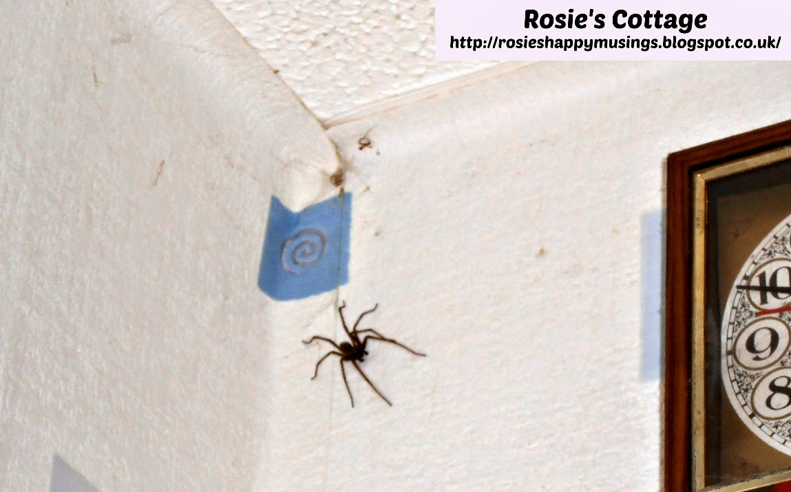 very large house spider