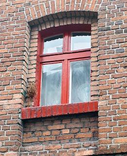Palma wielkanocna zaobserwowana na osiedlu Kaufhaus w Rudzie śląskiej