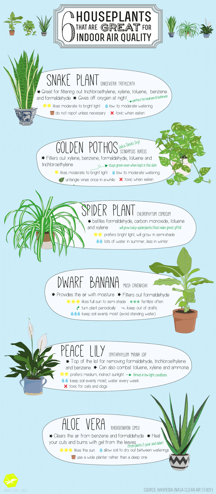house of thol: 6 Houseplants that are great for indoor air ...