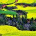 Los paisajes más coloridos del mundo.