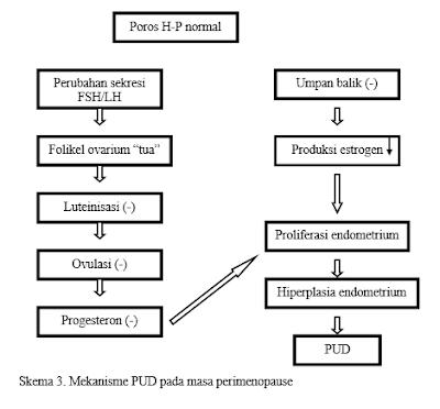 mekanisme-perdarahan-uterus-disfungsional-pada-perimeopause