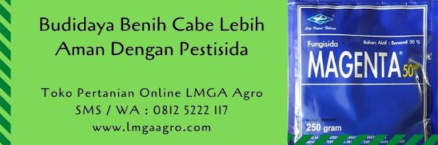 benih cabe,cabe merah,cabe rawit,cabe keriting,pestisida,hama tanaman,insektisida,herbisida,fungisida,lmga agro