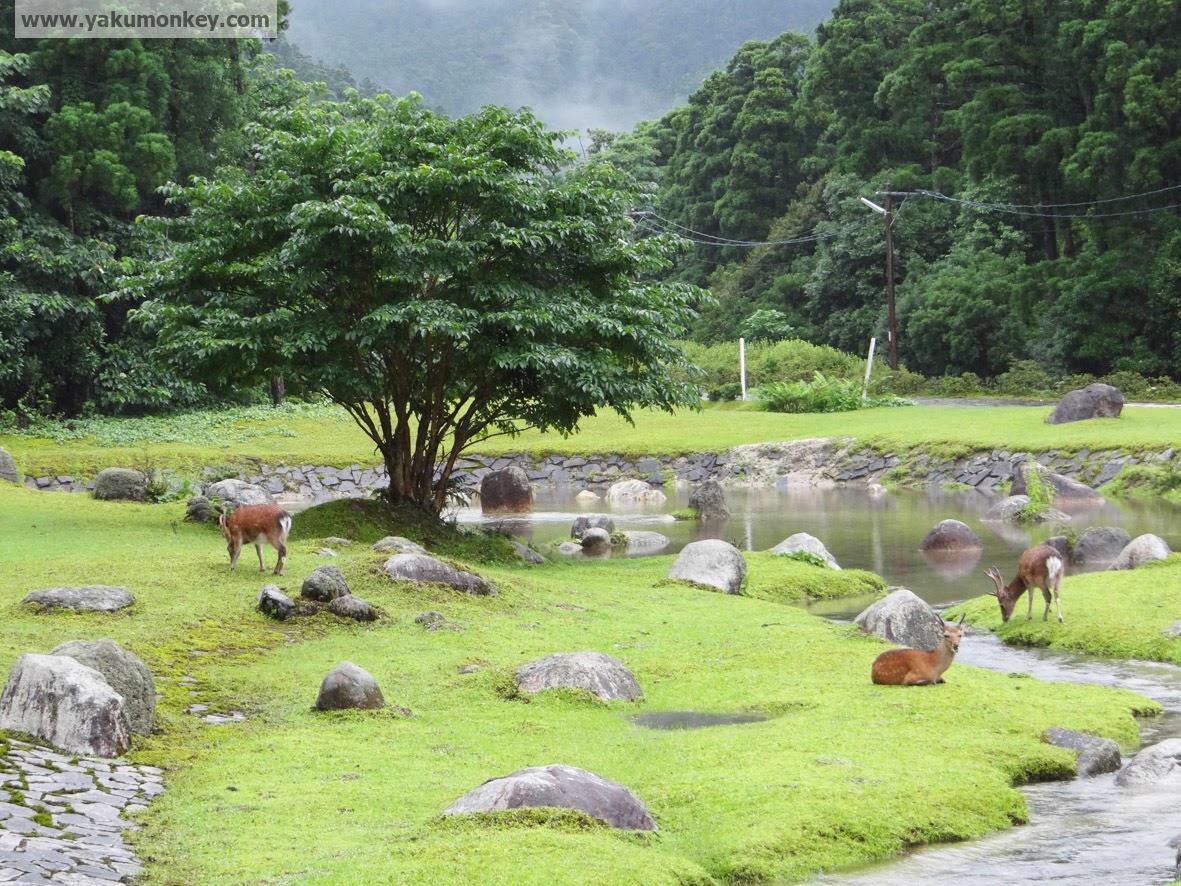 Miyanoura Recreational Park, Yakushima